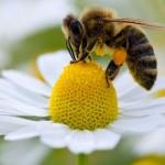 Reportaje del Escarabajo Verde: Un mundo sin abejas