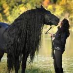 Impresionante caballo frisón, Frederik el Grande