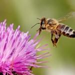 Documental La Noche Temática – El efecto abeja