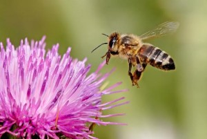 documental abejas