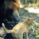 Gato defiende su casa ante un oso grizzly