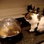 Gato alucinando con las palomitas (de comer)