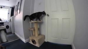gato perro escapando casa
