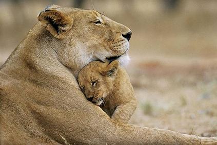 leona cria