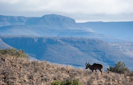 parque nacional karoo kudu