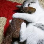 La ardilla que cree ser un gato