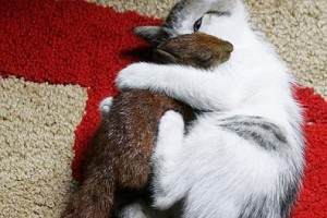 gato ardilla