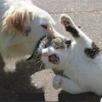 Muy gracioso: perro pensaba que un gato estaba muerto