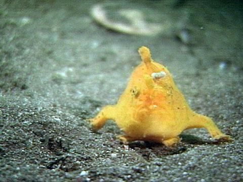 Extraños animales del mar de Japón