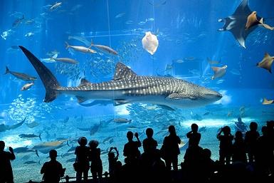 acuario mas grande del mundo