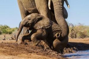 bebe elefante baño