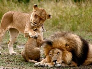 cachorros leon familia