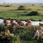 Documental: Mara, el río de la muerte