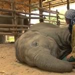 Mujer cantando a un elefante