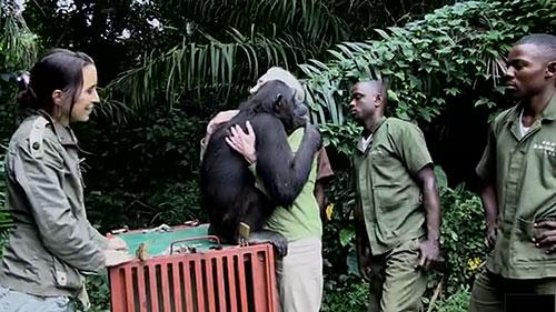 abrazo chimpance jane goodall