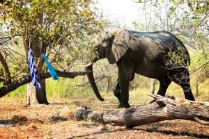 elefante campamento
