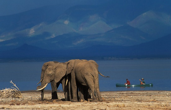 elefantes parque natural manyara