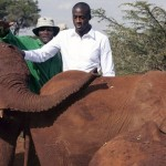Fifa World Cup 2014 con elefantes