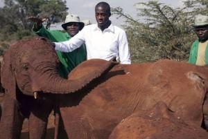 elefantes yaya toure