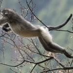 Traviesos monos de extraordinaria belleza