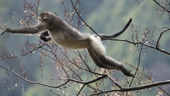 mono travieso saltando