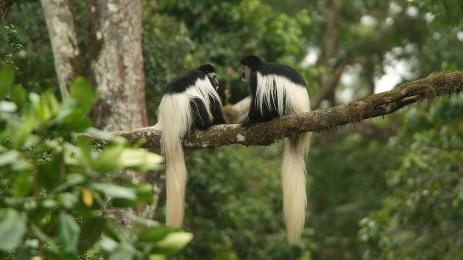 monos parque natural arusha