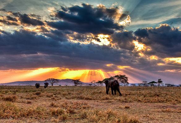 reserva natural Tarangine elefantes