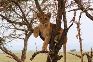 reserva natural Tarangine leon arbol
