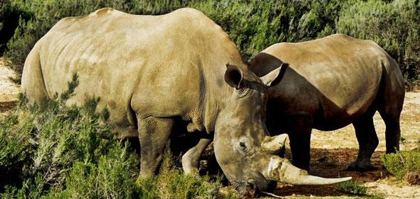 Animales salvajes en el Parque Karoo