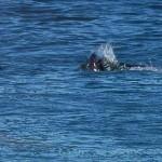 Campeon de surf es atacado por un tiburon