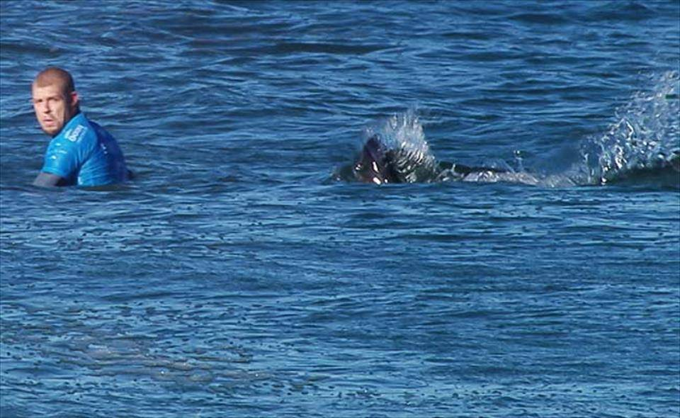 tiburon atacando Mick Fanning