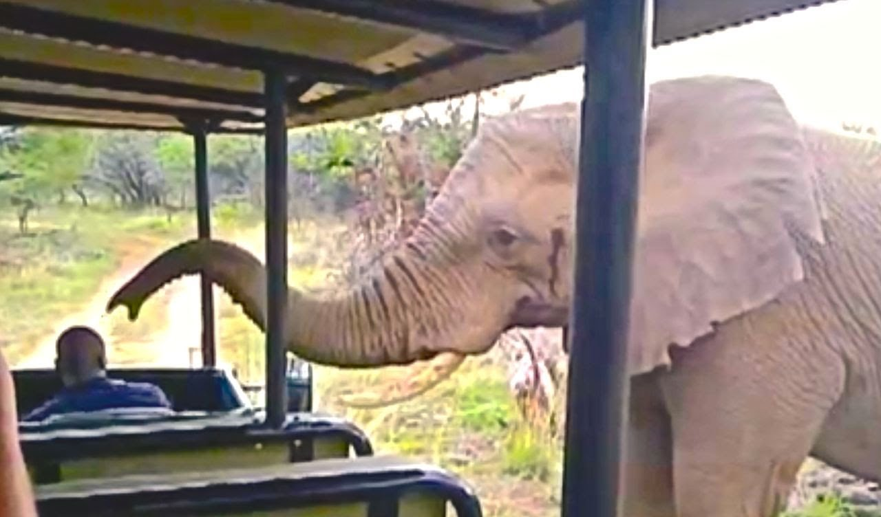 Elefante oliendo turistas
