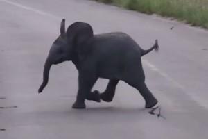 elefante persiguiendo pajaros
