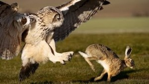 Do Owls Hunt Small Dogs
