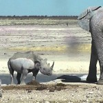 Elefante bañando a un rinoceronte