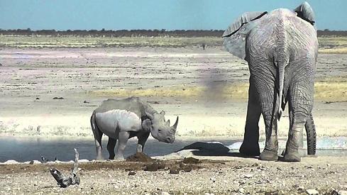elefante rinoceronte ethosa