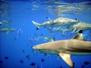 tiburones delfines