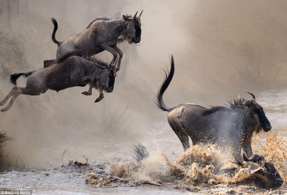ñus volando