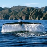 Documental: Reserva de la biosfera Islas del Golfo de California