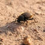 Documental – Reserva de la biosfera El Pinacate y Gran Desierto de Altar