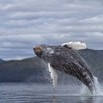 Ballena volando sobre el mar