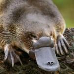Documental – Y los mamiferos pusieron huevos