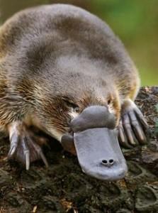 documental australia marsupial
