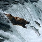 Documental – La Tierra de los Osos Gigantes