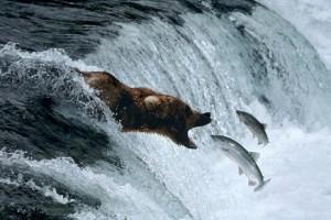 documental oso grizzlie