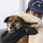 Reencuentro con su perro tras el tsunami