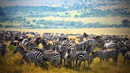 Safari en el Masai Mara en 2014
