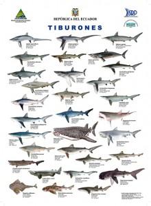 lista especies de tiburones