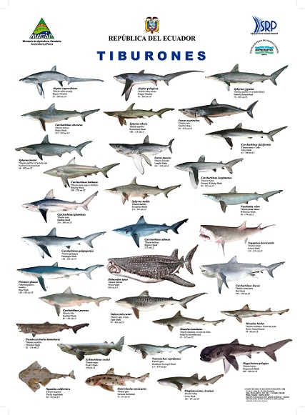 Lista de especies de tiburones