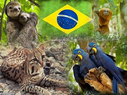animales brasil